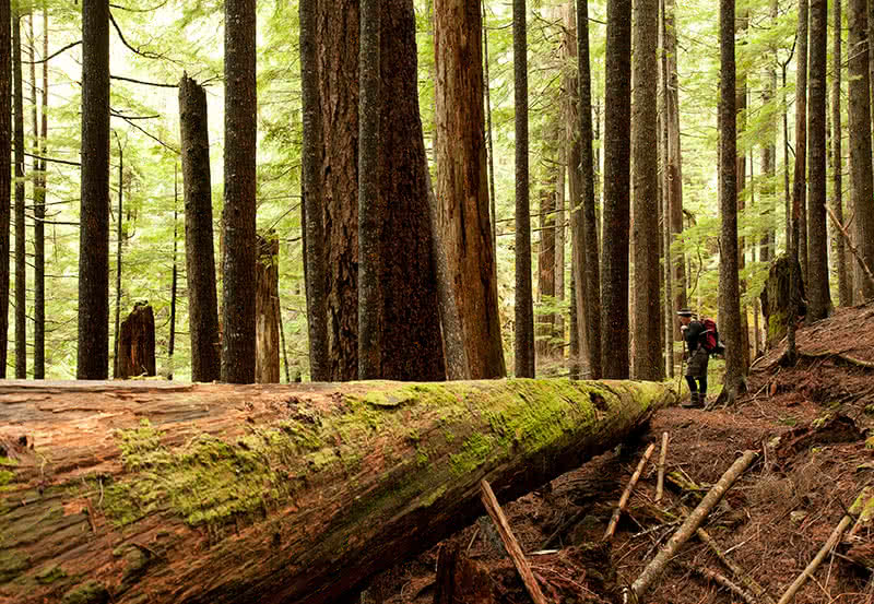 A man hiking on the Atrevida Loop trail north of Powell River