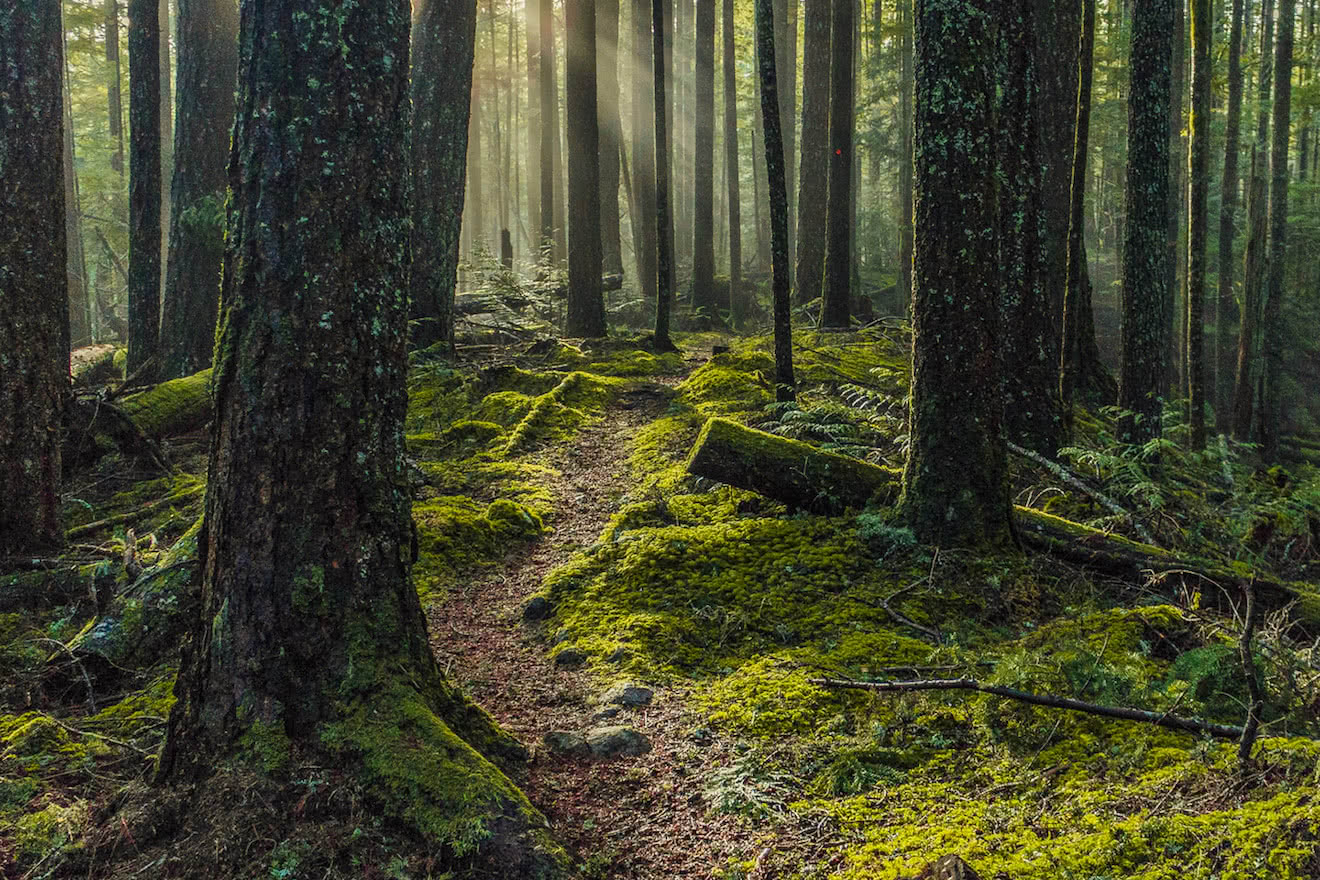 A mossy hiking trail just outside Powell River, British Columbia