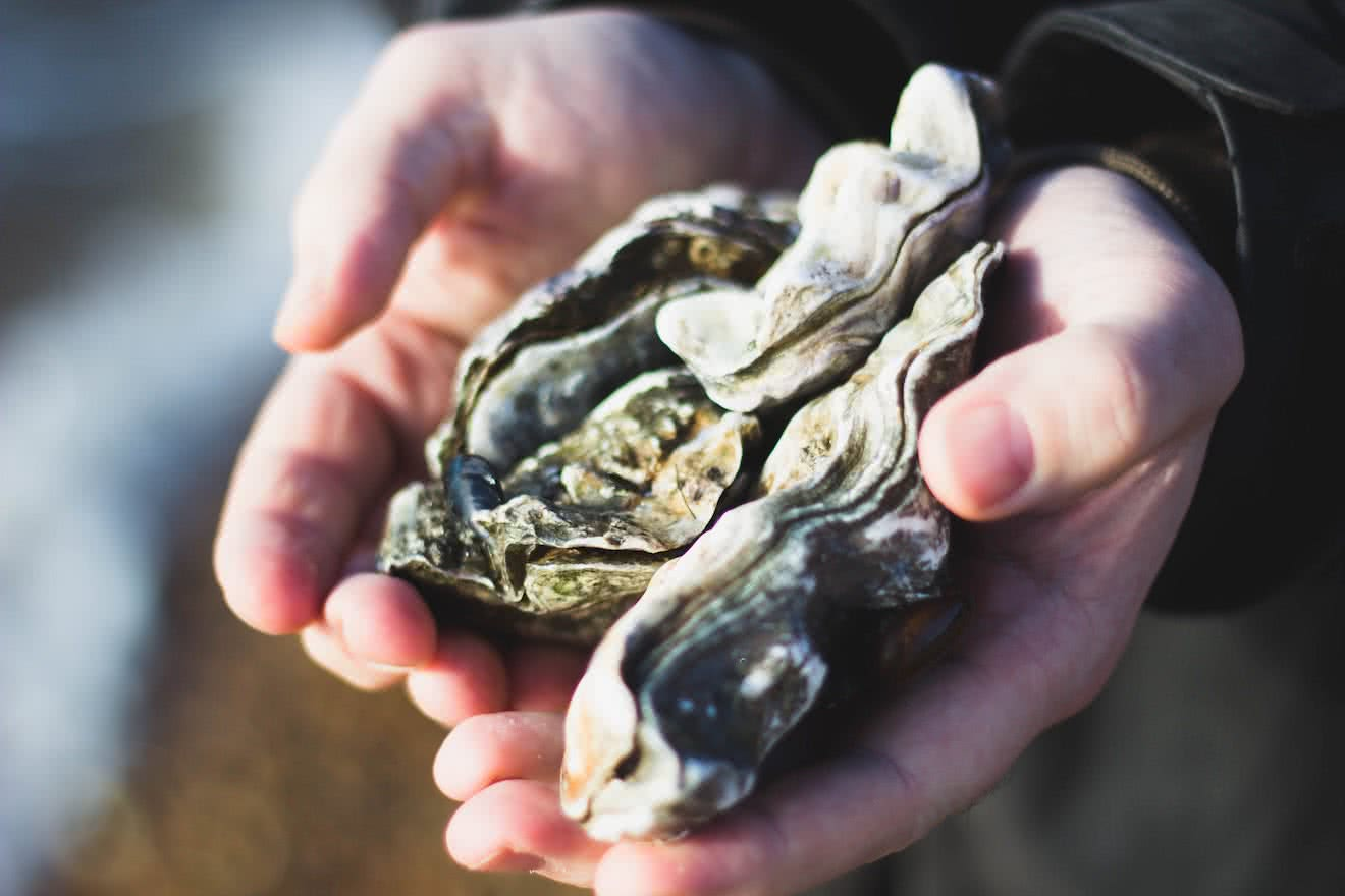 Desolation Sound is one of the most abundant areas for oyster production in BC
