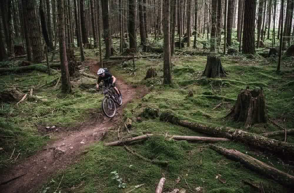 A mountain biker riding through mossy trails