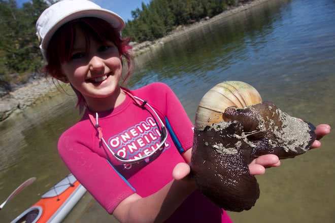 Educational opportunities abound on family kayak tours, such as learning about this gigantic moon snail