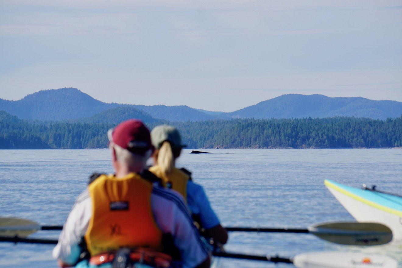 Two kayakers watch a humpback whale in the distance from their kayaks in Desolation Sound
